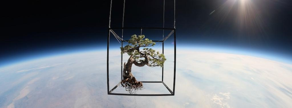 Bonsai Pine Tree in Space, Exobiotanica—Botanical Space Flight (Azuma Makoto)